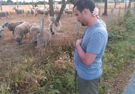 adrien-moutons_